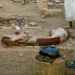 Witnessing a Camel Sacrifice in Sudan