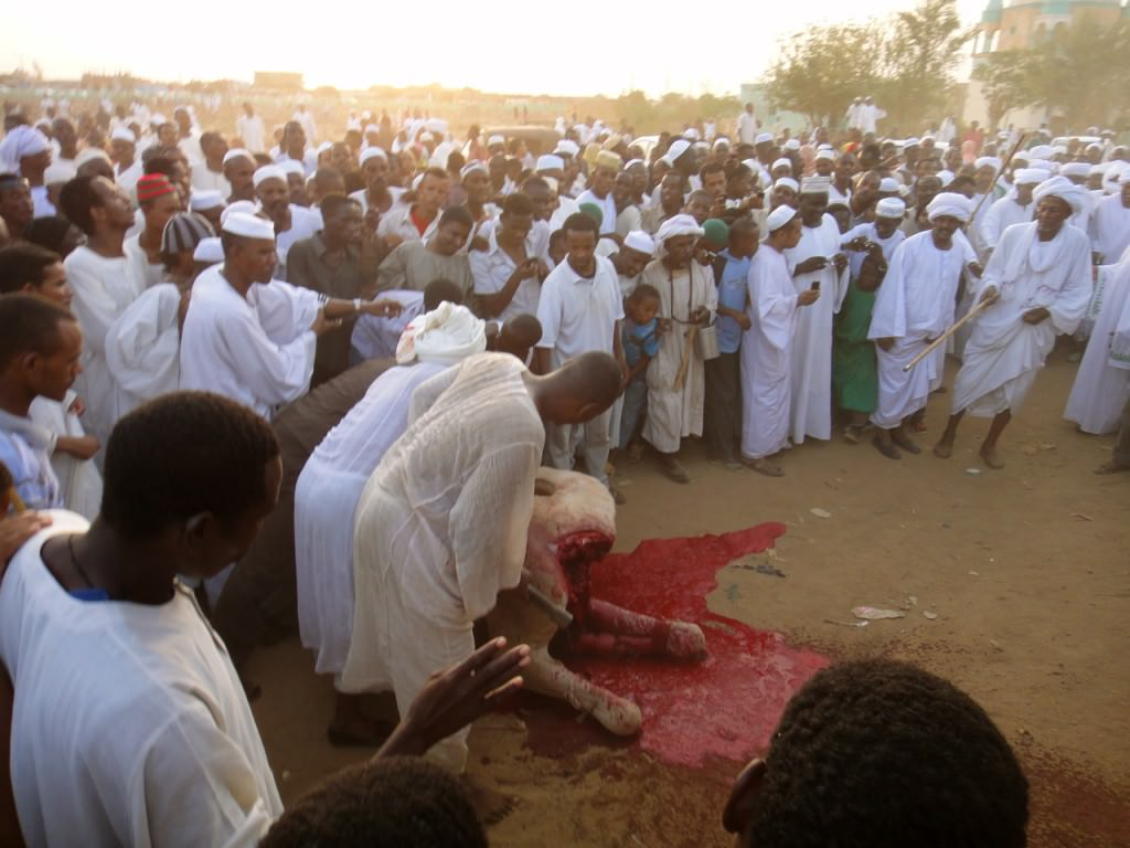 Dead Camels in Sudan