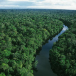 Learn to Survive in the Amazon Rainforest