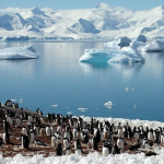 Traveling in Antarctica – Anyone Crazy Enough To Join Me?!