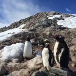 5 Reasons to Visit Antarctica