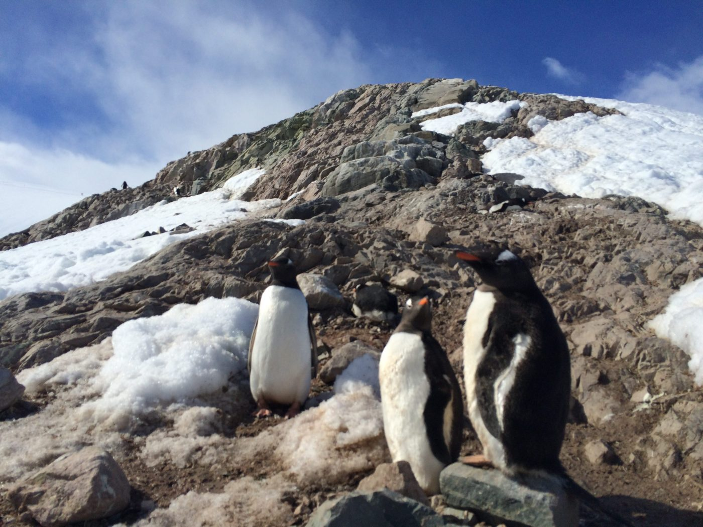 5 reasons to visit antarctica one step 4ward
