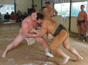 sumo stable in tokyo