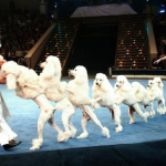 Visiting the Russian circus in Moscow