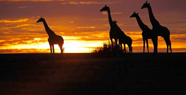 africa-trips-01