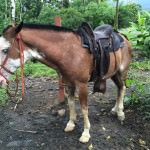 Horse Riding in Costa Rica at the Blue River Resort