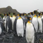 Visiting Antarctica: An Experience Like No Other