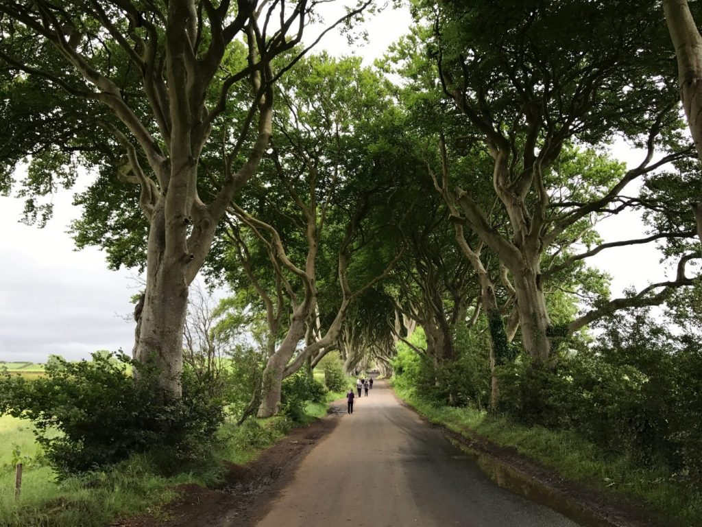 the dark hedges game of thronesthe dark hedges game of thrones