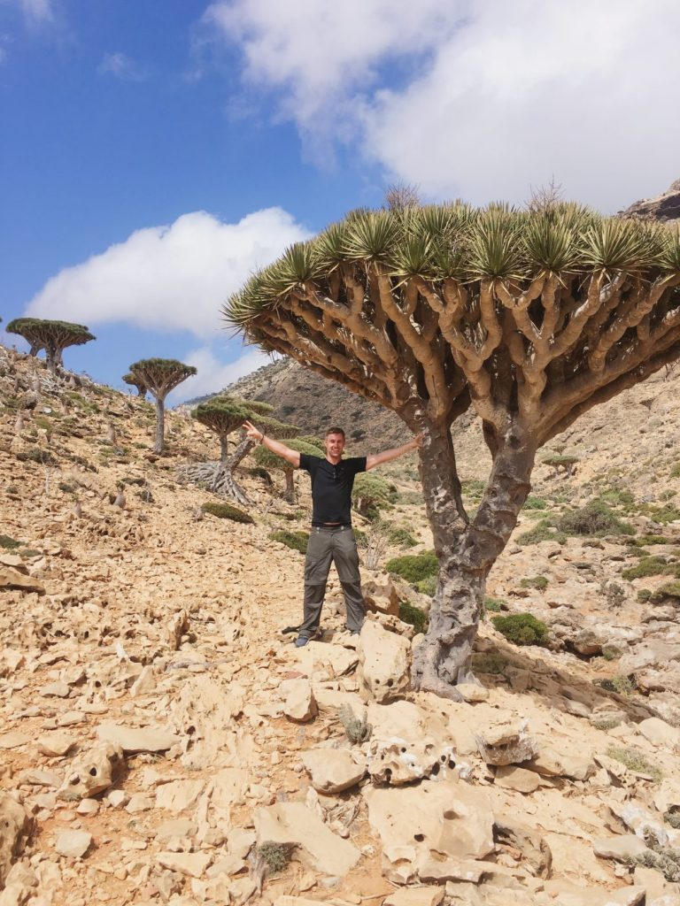 dragon blood tree socotra island yemen