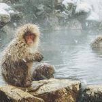 How To Visit the Snow Monkeys Japan