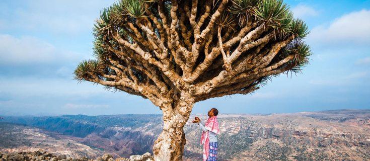 Socotra Tour, Yemen