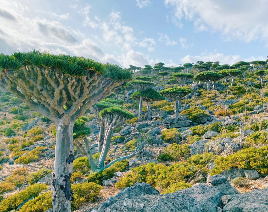 Socotra Tours 2021
