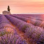 5 Best Places To Visit In Valensole 2021